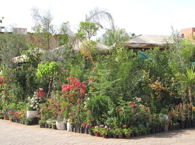 Maroc Marrakech marchand de fleurs place Jemaa El Fna